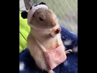 Устали от новостей про корону Посмотрите, как кушает этот милый грызун