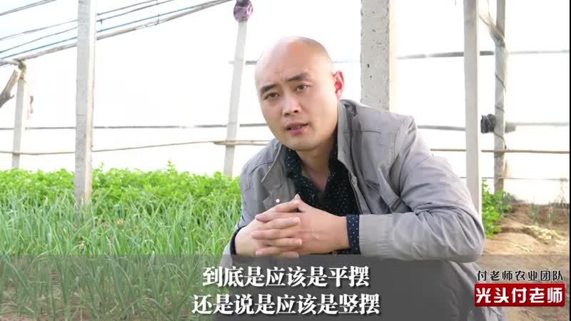 Китайский бизнес. Выращивание имбиря 生姜 (Китай)