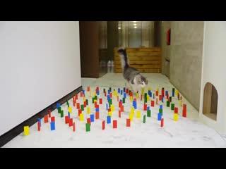 Как справляется собака и кошка на полосе препятствий
