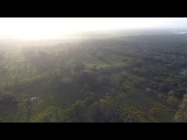 Aerial view of the Main Plateau of Aguada Fénix