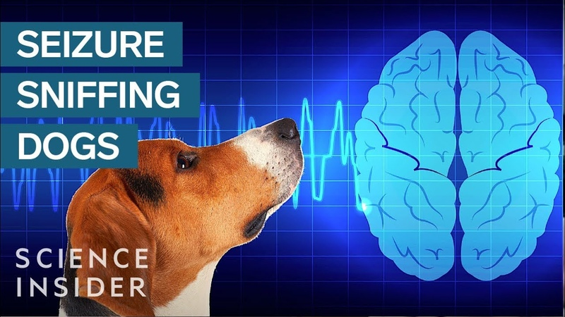 How Dogs Sniff Out Seizures