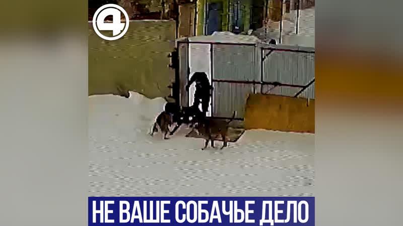 Не ваше собачье дело