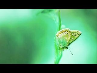 Self Love Energy   Relaxing Meditative Music 528Hz   Positive Vibe   Miracle Tone Healing Music