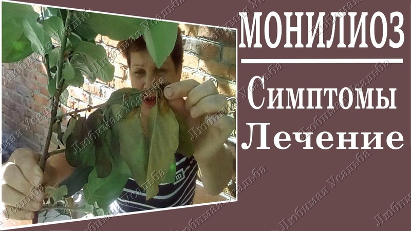 Болезни плодовых деревьев Монилиоз Препараты лечение