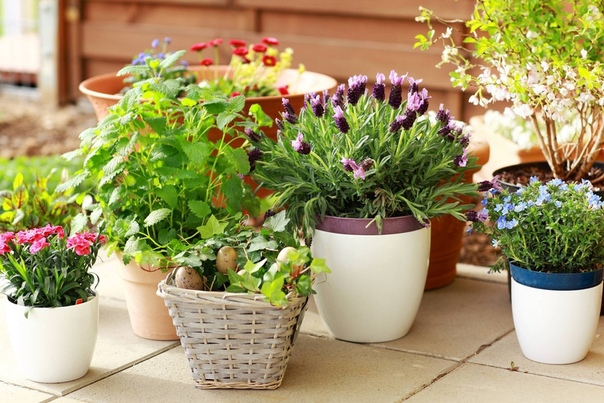 Полезные цветы Создавая уголок живой природы, стоит присмотреться к тем растениям, которые являются особенно полезными по разным причинам. Например, хлорофитум, поглощает до 80% вредных веществ,