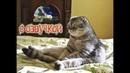 Приколы с котами и смешная озвучка животных – Ржака до слёз от PSO