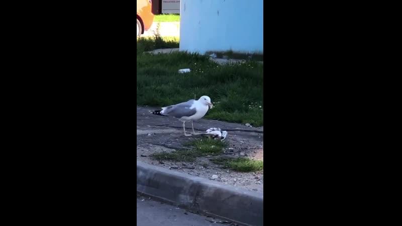 Пташка небесная ужинает.mp4