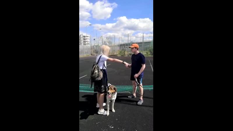 Яжемамка с собакой не поделила площадку корт с подростками порезала ножом сетку и руку парню