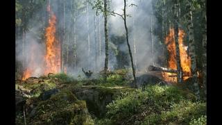 МЧС предупредило о высокой пожарной опасности в Кировской области(ГТРК Вятка)
