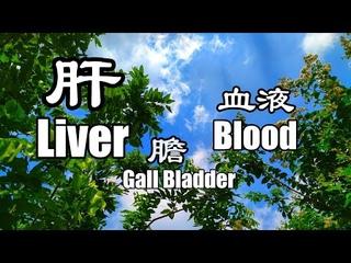 528Hz | 肝臟 膽囊 血液 西藏頌缽療癒音頻 Tibetan Singing Bowl Healing Sound 調整器官工作頻率 Organ Vibration 啟動