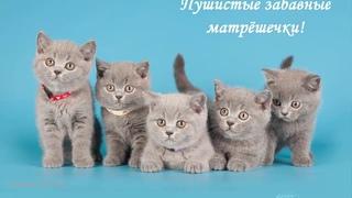 Ах, эти удивительные кошечки!