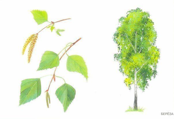 СОБИРАЕМ ЛИСТОЧКИ Полезная игра для детей осенью на улице. Идем в парк и собираем с ребенком опавшие листья, определяем с какого они дерева, показываем и называем это дерево. Затем можно