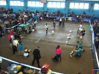 Конкурс Юный Хендлер белорусский CACIB  (старшая группа)