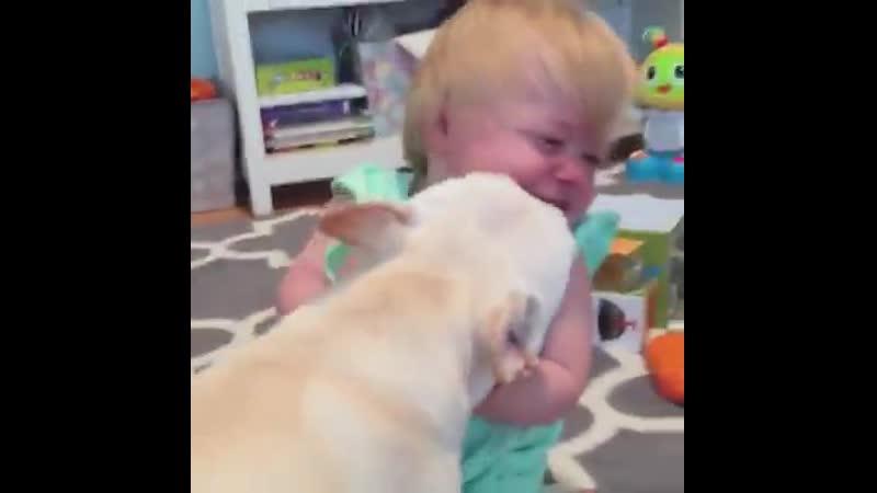 Они говорят что собаки лучший друг человека мы говорим что они семья