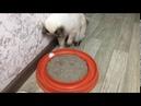 кот Питер Пэн играет