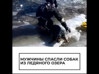 Спасение собак из ледяного озера