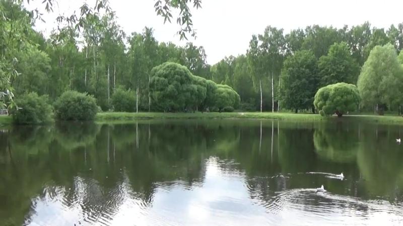 Сосновка Птички на пруду Видео Ирина Тарасова 2 07 20