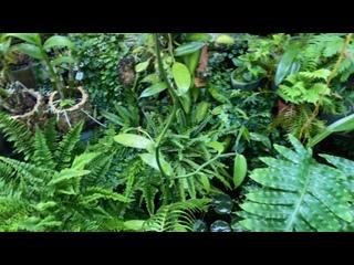 Video by Орхидейный мир
