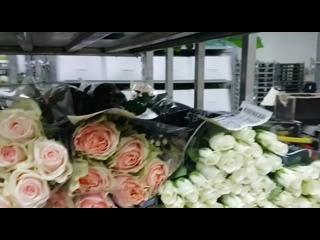 Flowersale Forever 21/02/19