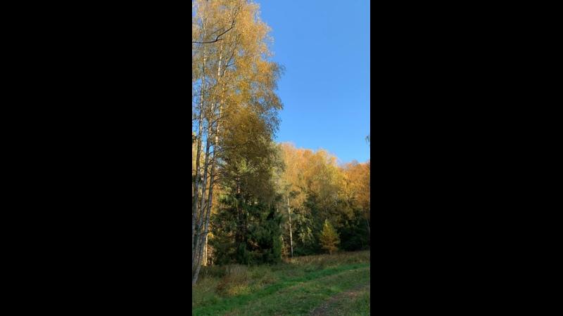 Видео от Виктории Кучмы