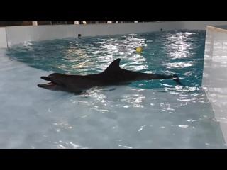 Черноморская афалина ❤️ дельфин Кася ❤️   ***ULTIMISSIME DA KISH ISLAND...***