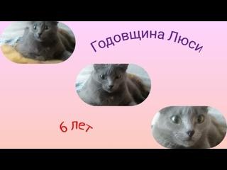 Годовщина Люси - 6 лет