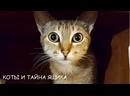 Коты и тайна ящика