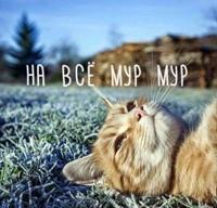Elіna Konvalyuk, Hotin - photo №7