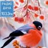 Радио Дача Ярославль 103.3 FM