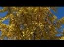 Яд. Достижение эволюции. 3-я серия. Ядовитая война растений и животных