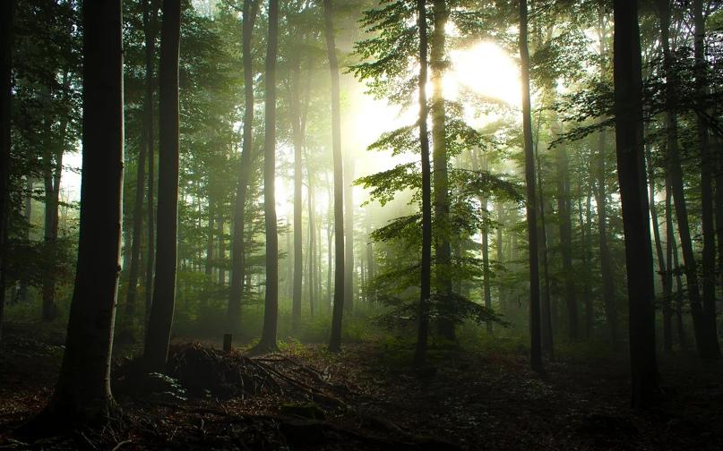 Самые красивые леса нашей планеты., изображение №3