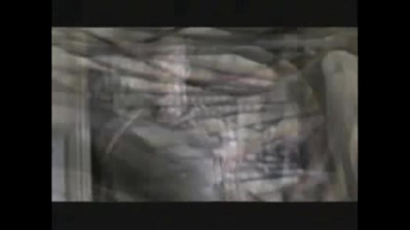 Трейлер Ночные кошмары и фантастические видения По рассказам Стивена Кинга 2006