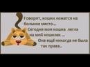 Приколы с Котами. Подборка Видео про Кошек, которые Любят Деньги. Смешные Кошки и Коты.mp4