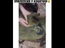 Эпилепсия у кота. ПОТЕРЯШКИ СЫКТЫВКАР - svk/lost_komi
