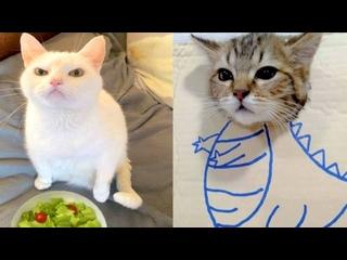 Смешные коты   Подборка за неделю #178