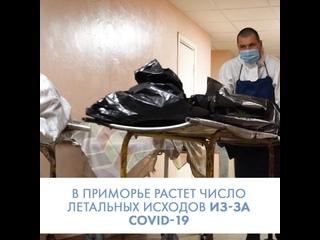 В Приморье увеличилось число летальных исходов COVID-19 среди граждан 35-40 лет