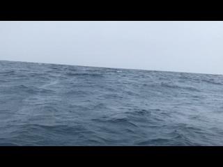 Видео от Сергея Тетерского
