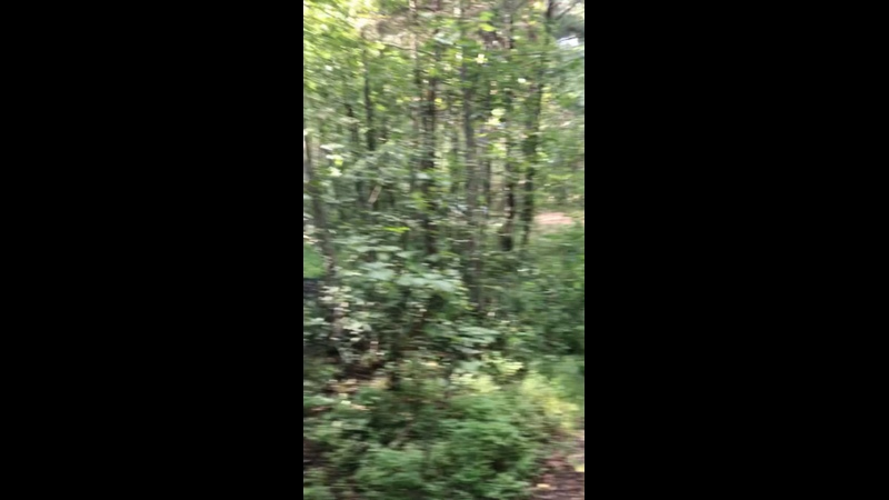 Видео от Алины Лашковой