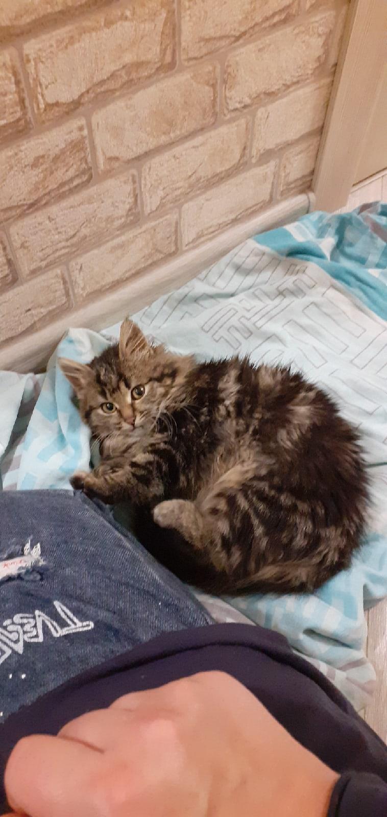 Помогите найти котёнку дом Малышку нашли на улице замёрзшую и жалобно просящую помощи, в квартире ведёт себя спокойно, ручная и очень ласковая, мурчит как трактор .