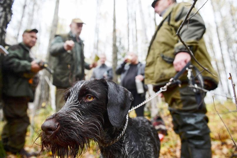 Начинающие охотники будут сдавать экзамены по правилам охоты
