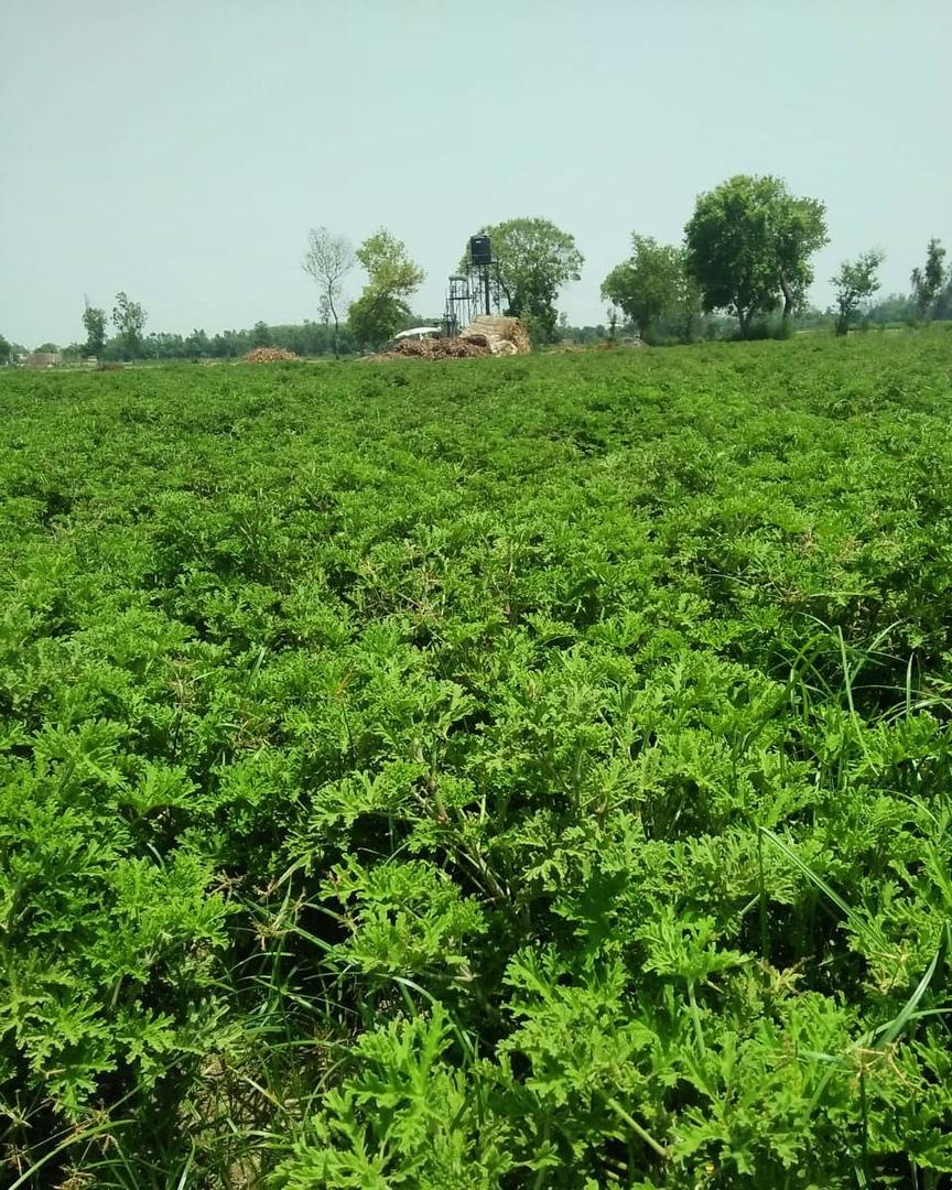 Nisarga Farms, изображение №5