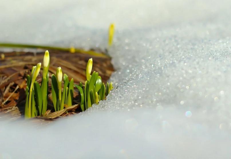Полчаса до весны.