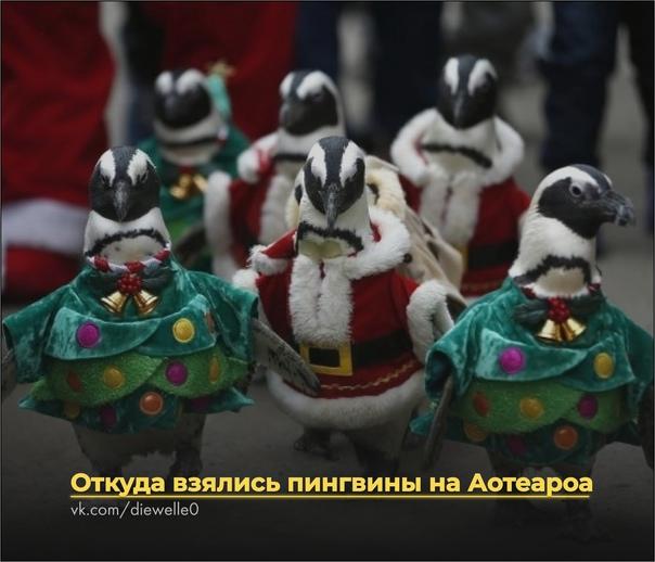 Откуда взялись пингвины на Аотеароа Давно это было. Пошёл Анару рыбачить и на берегу лодку увидел. Странная лодка - белая, как пена на волнах. В лодке девочка сидит, плачет. Девочка тоже белая -