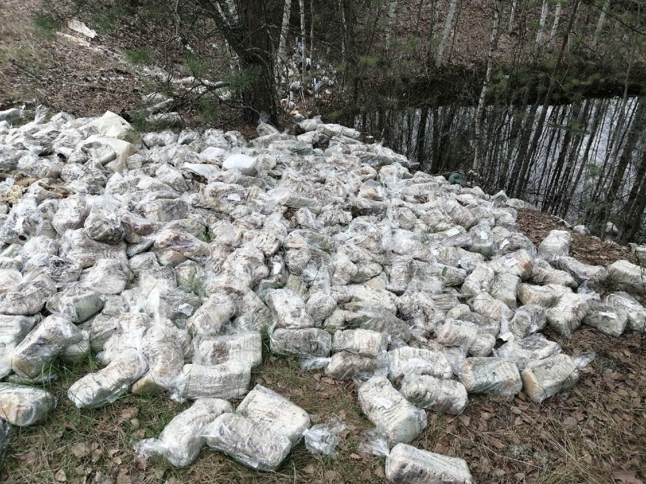 свалка хлеба в лесу под Дзержинском