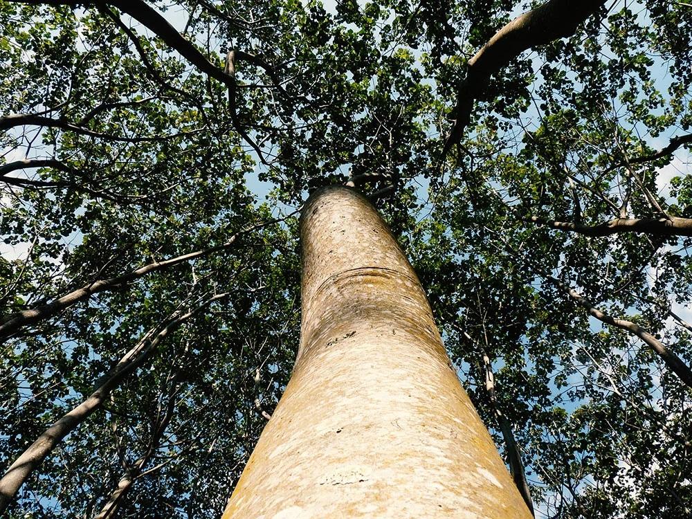 Дерево-пенопласт. В 10 раз легче воды