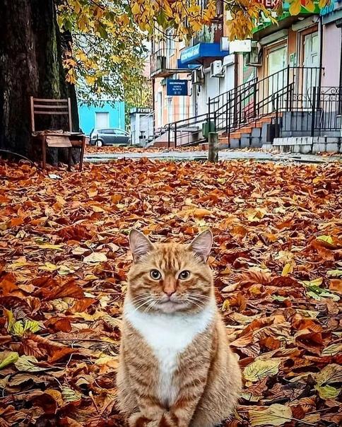 Брутальный сочинский котик желает вам доброго дня  источник sochi_life Сочи