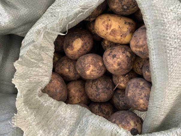 Картофель , 40р за 1 кг, на варку очень хороший 79...