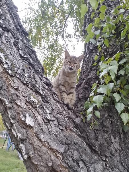 Доброе утро! Сегодня у нас #котовторник. Ждём ваших котеек в комментариях.