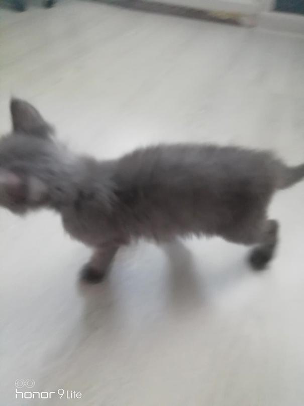 Отдам котёнка (мальчик) в добрые руки. | Объявления Орска и Новотроицка №23642