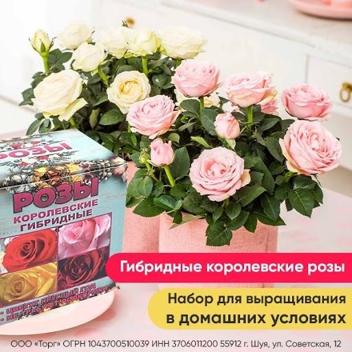 Кейс: «Королевские гибридные розы» в MyTarget!, изображение №5